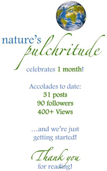 Nature's Pulchritude